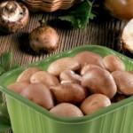 Groupe Guillin Mushroom Packaging
